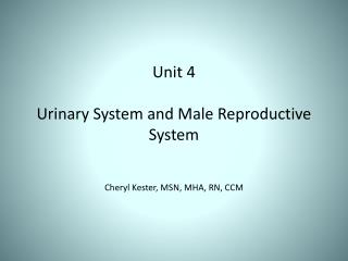 Unit 4 Urinary System and Male Reproductive System