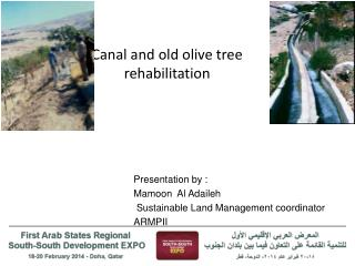 Canal and old olive tree rehabilitation
