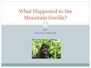 What Happened to the Mountain Gorilla?