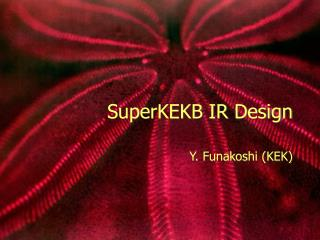SuperKEKB IR Design
