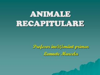 ANIMALE RECAPITULARE