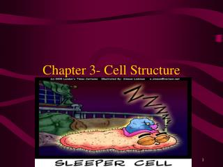 Chapter 3- Cell Structure