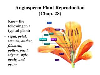 Angiosperm Plant Reproduction  (Chap. 28)