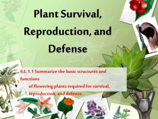 Plant Survival, Reproduction, and  Defense