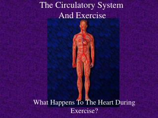 The Circulatory System  And Exercise