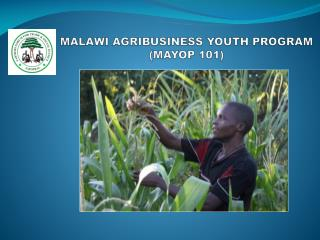 MALAWI AGRIBUSINESS YOUTH PROGRAM (MAYOP 101)