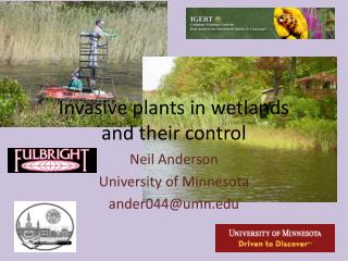 Invasive plants in wetlands and their control