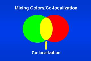 Mixing Colors/Co-localization