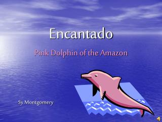 Encantado Pink Dolphin of the Amazon