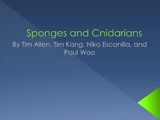 Sponges and Cnidarians