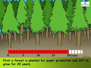 First a forest is planted for paper production and left to grow for 20 years.