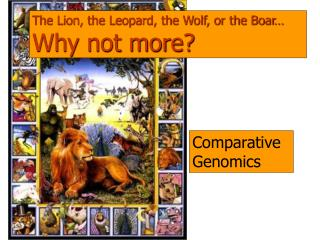 The Lion, the Leopard, the Wolf, or the Boar… Why not more?