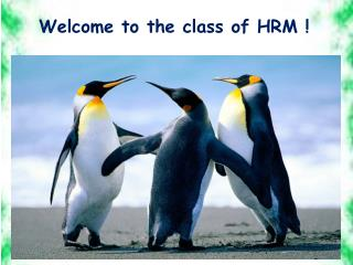 Welcome to the class of HRM !