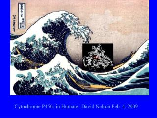Cytochrome P450s in Humans  David Nelson Feb. 4, 2009