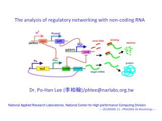 The analysis of regulatory networking with non-coding RNA