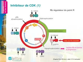Inhibiteur de CDK (1)