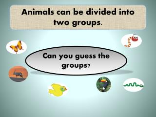 Animals can be divided into two groups.
