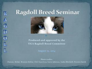 Ragdoll Breed Seminar