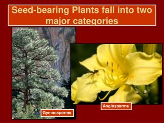 Seed-bearing Plants fall into two major categories
