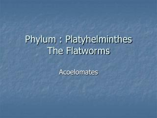 Phylum : Platyhelminthes The Flatworms