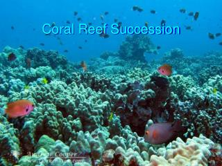 Coral Reef Succession