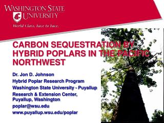 CARBON SEQUESTRATION BY HYBRID POPLARS IN THE PACIFIC NORTHWEST