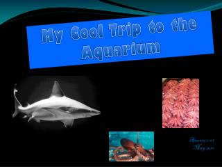 My Cool Trip to the  A quarium