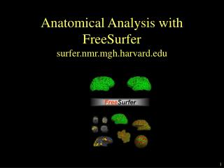 Anatomical Analysis with  FreeSurfer surfer.nmr.mgh.harvard.edu
