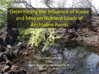 Determining the Influence of  Kiawe  and Milo on Nutrient Loads of  Anchialine  Ponds