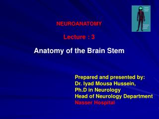 NEUROANATOMY Lecture : 3 Anatomy of the Brain Stem