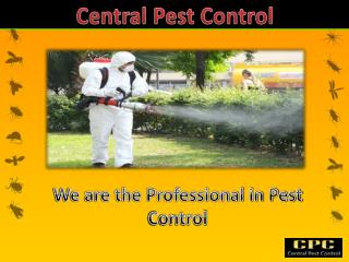 Find The Professional Pest Control in London