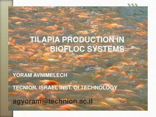 TILAPIA PRODUCTION IN BIOFLOC SYSTEMS