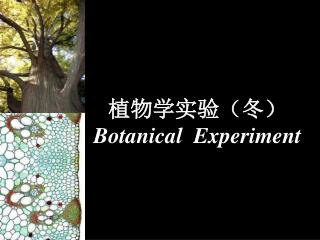 植物学实验(冬) Botanical  Experiment