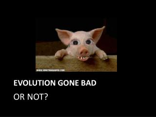 Evolution Gone Bad