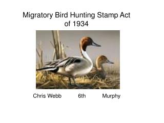 Migratory Bird Hunting Stamp Act of 1934