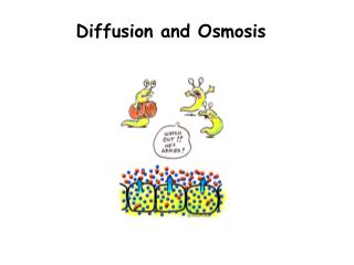 Diffusion and Osmosis