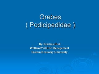 Grebes ( Podicipedidae )