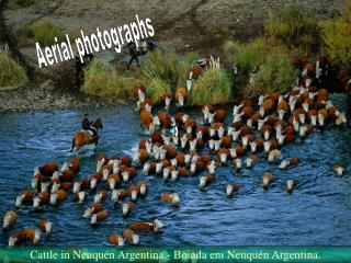 Aerial photographs