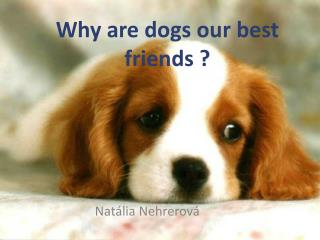 Why are dogs our best friends ?