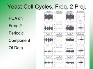 Yeast Cell Cycles, Freq. 2 Proj.