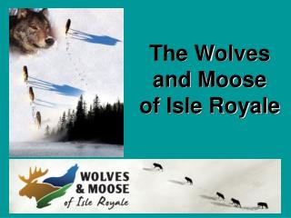 The Wolves and Moose  of Isle Royale