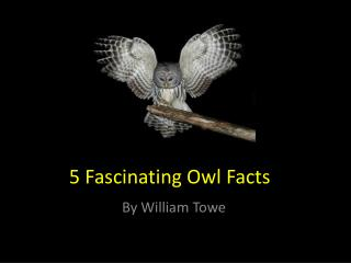 5 F ascinating Owl Facts