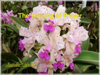 The Blessing of Prayer