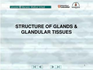 STRUCTURE OF GLANDS & GLANDULAR TISSUES