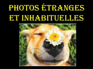Photos étranges et inhabituelles