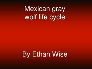 Mexican gray wolf life cycle   By Ethan Wise