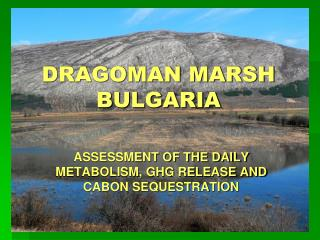 DRAGOMAN MARSH BULGARIA