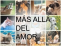 M S ALL  DEL AMOR