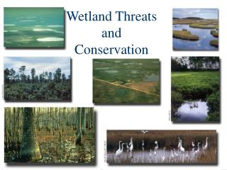 Wetland Threats and Conservation
