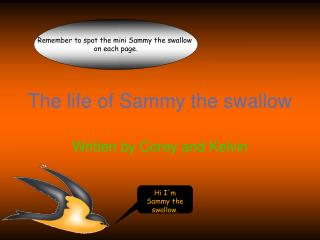 The life of Sammy the swallow